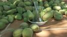Çağla Meyvesinin Faydaları Nelerdir?
